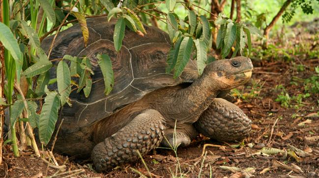 tortuga-isla