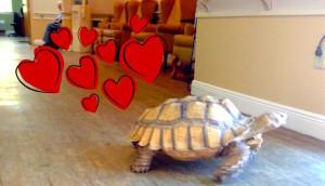 tortuga-terapia-corazones