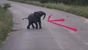 Elefante-jugando-pajaritos
