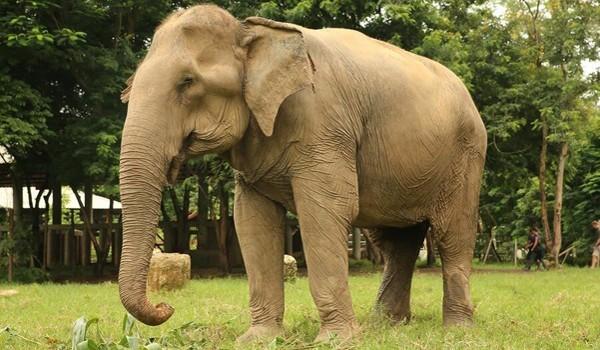 Elefante6