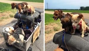 Hombre-sin-hogar-rescata-perros
