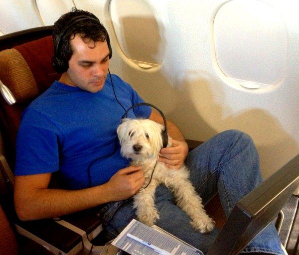 Perro-viaje-avion-aa
