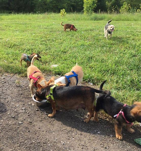 Rescate-viaje-hombre-perritos