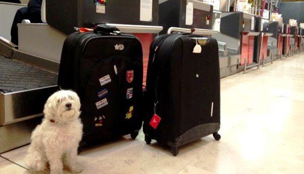 Viaje-perro-avion-aa