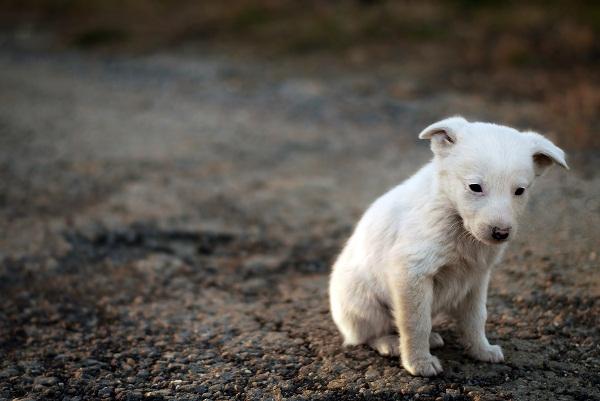 abandono-de-animales-y-mascotas
