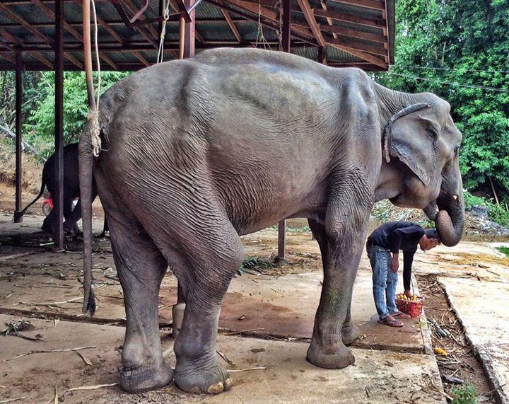 abuela elefante 1