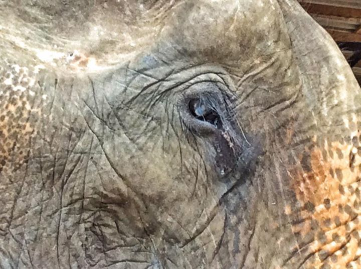abuela elefante 2