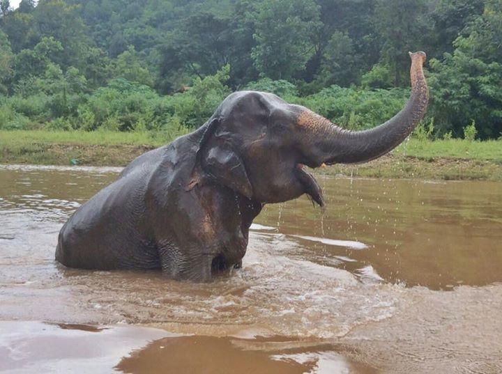 abuela elefante 3