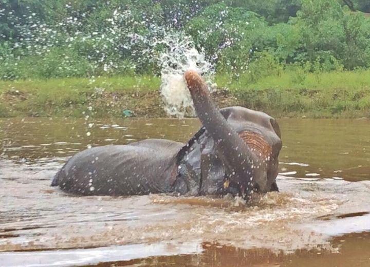 abuela elefante 5