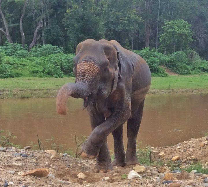 abuela elefante 7