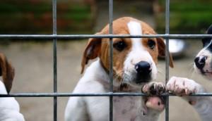 Adopción-de-mascotas - copia