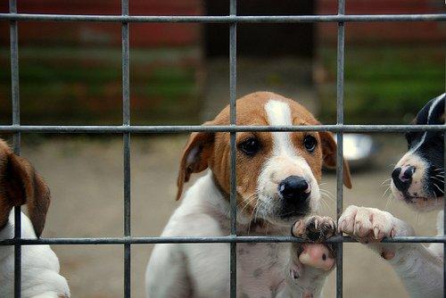 Adopción-de-mascotas