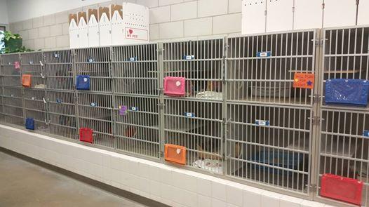 adopcion-perros-gatos3