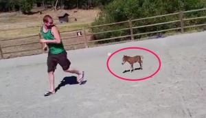 caballo-mas-pequeño