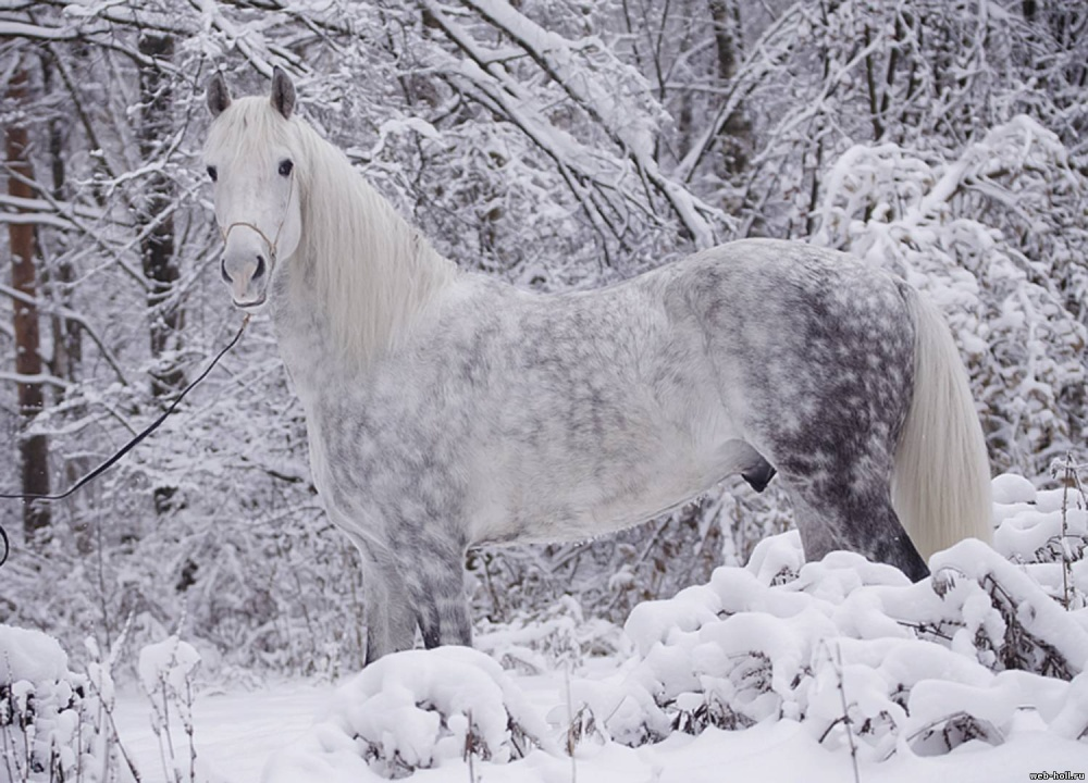 caballos bellos 11