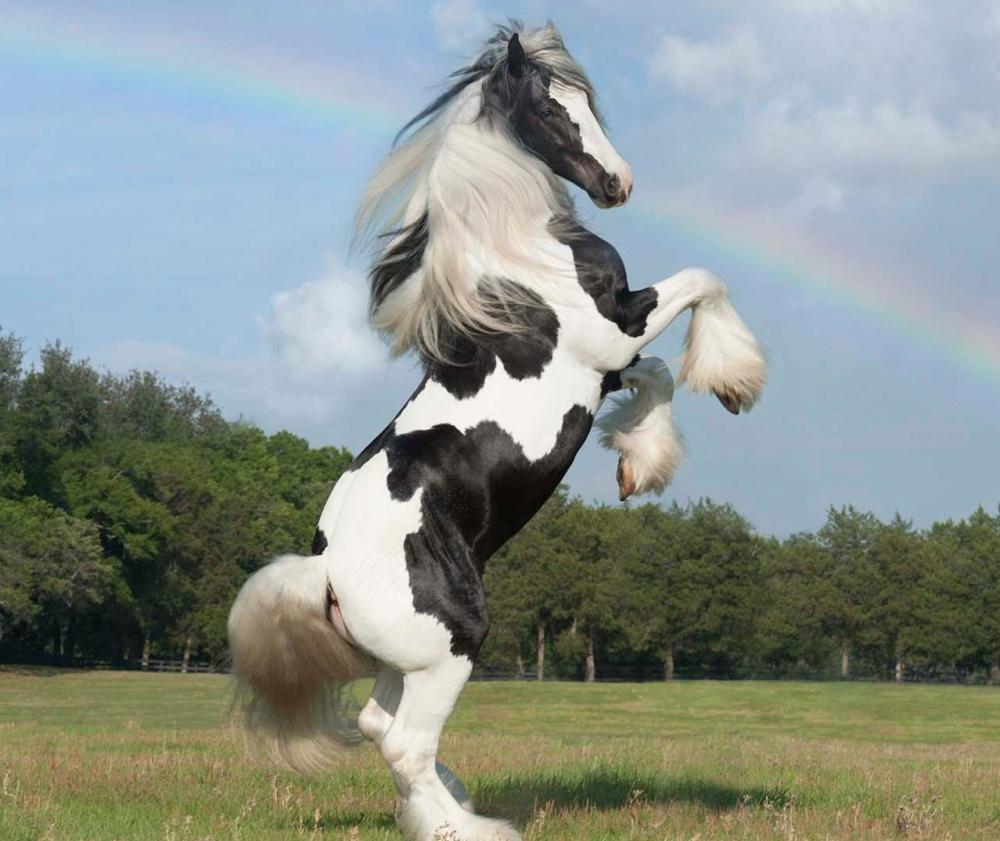 caballos bellos 12