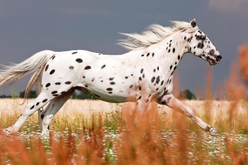 caballos bellos 13