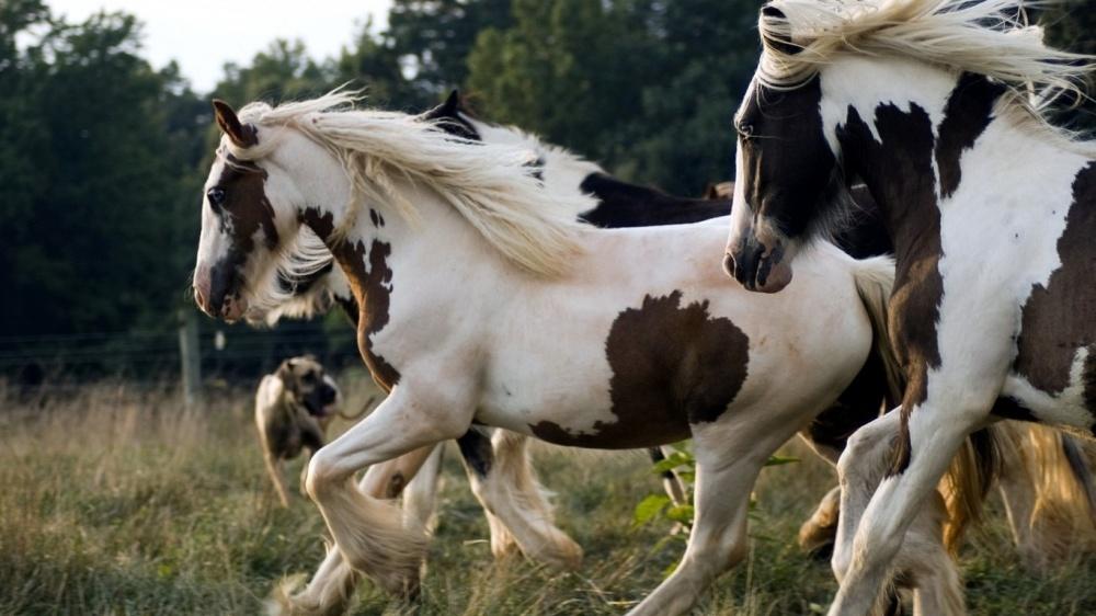 caballos bellos 14