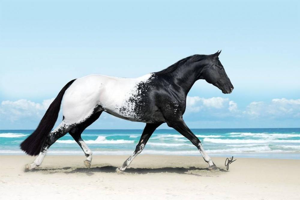 caballos bellos 15