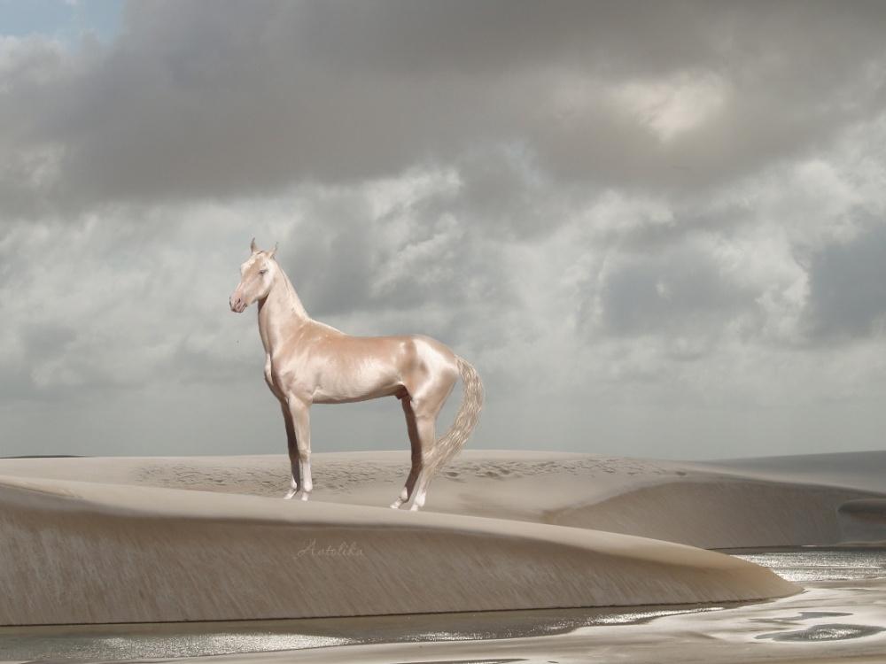 caballos bellos 2