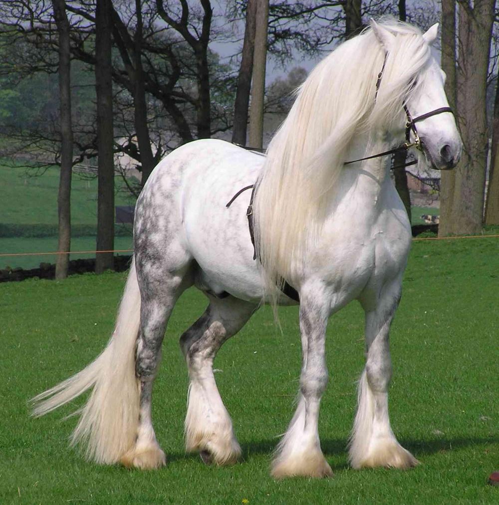 caballos bellos 3