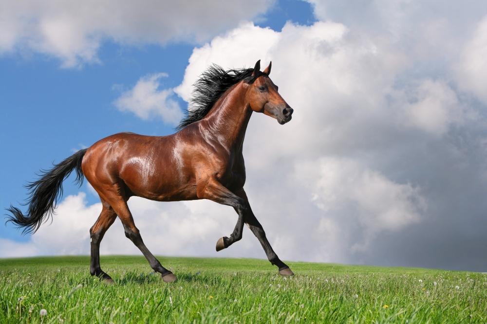 caballos bellos 4