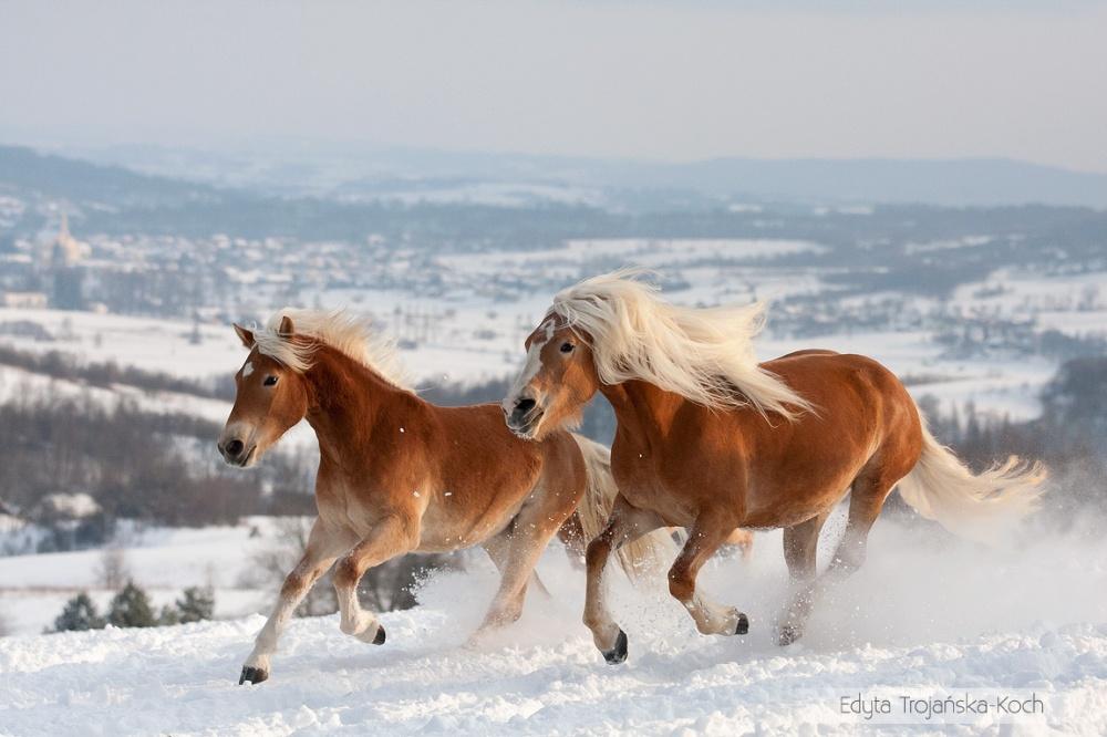 caballos bellos 5