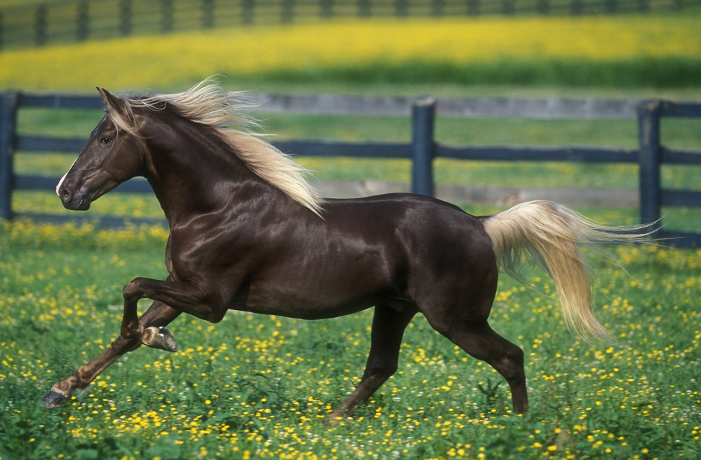 caballos bellos 6