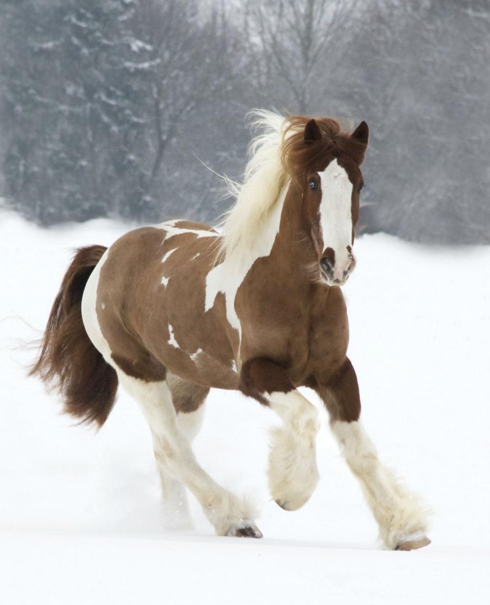 caballos bellos 7