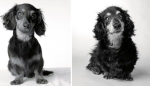 cachorro3 - copia