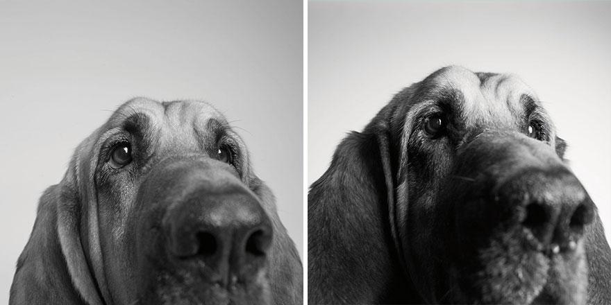 cachorro4