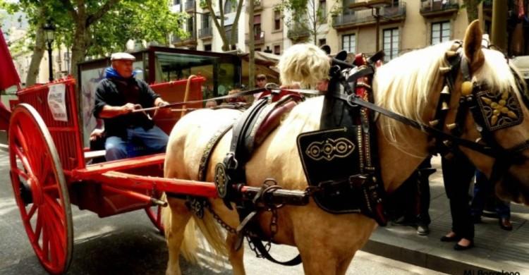 carruajes-caballos-barcelona 3