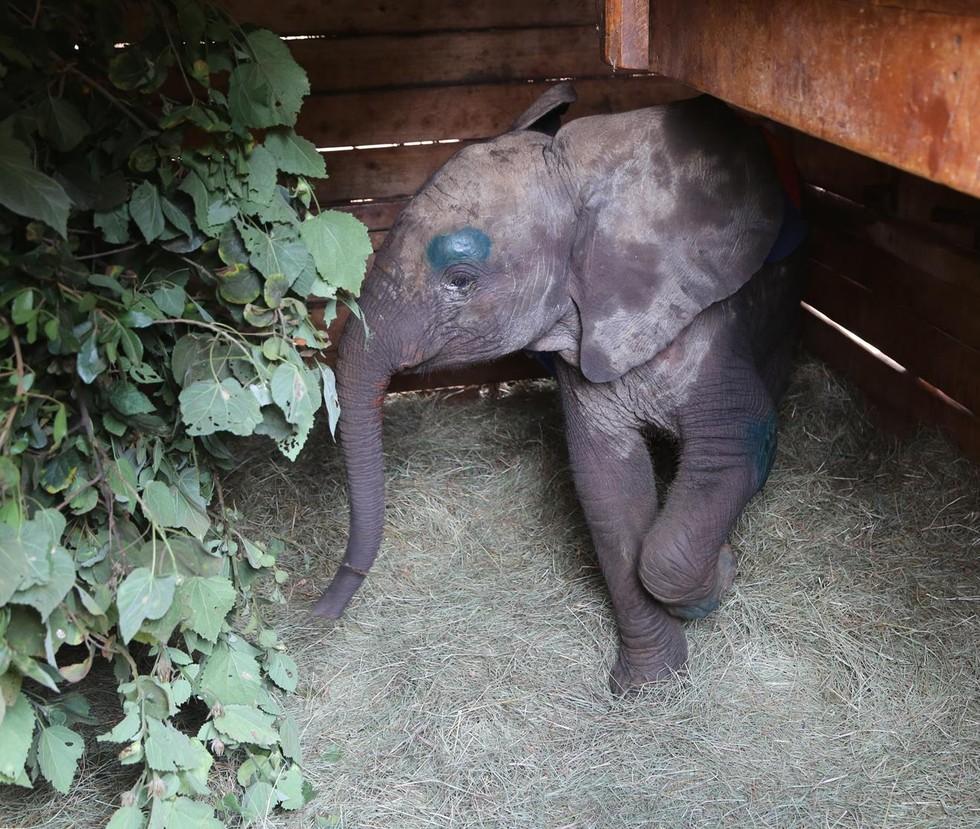 elefante-bebe-pozo-1