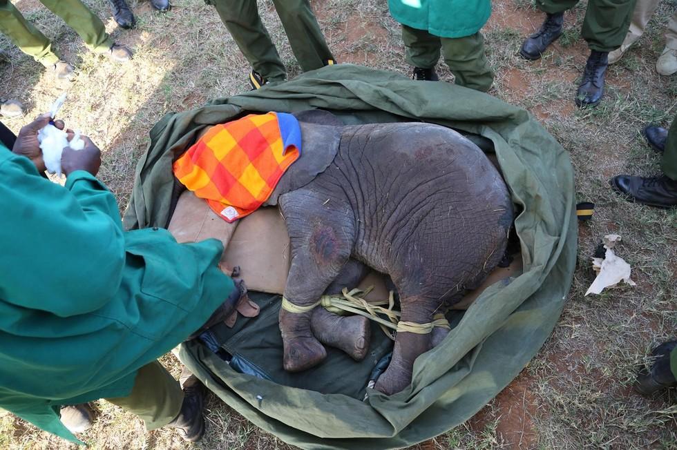elefante-bebe-pozo-2