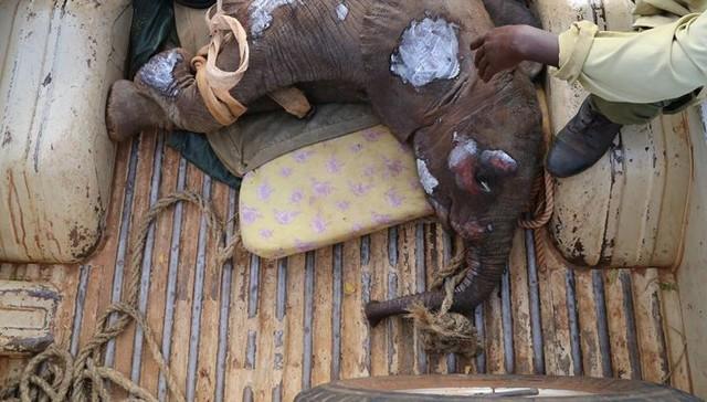 elefante-bebe-pozo-5