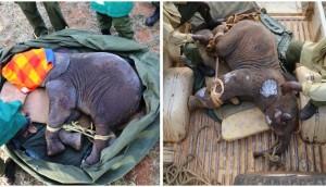 elefante-bebe-pozo-6