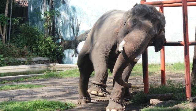 elefante-cautivo1