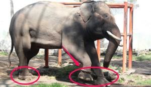 elefante-cautivo3 - copia