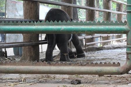 elefante-cautivo4