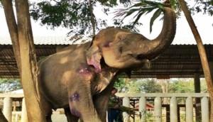 Elefante3 - copia