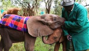 Elefante7 - copia