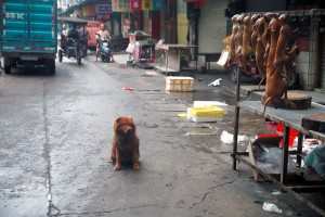 IMAGE DISTRIBUTED FOR HUMANE SOCIETY INTERNATIONAL - Humane Society International's China specialist, Peter Li, visited dog meat markets and slaughterhouses in Yulin, where locals consume dog and cat meat to observe the summer solstice (21 June). HSI has been working with local groups to end this suffering in China. Although some slaughterhouses remain in operation, the dog meat trade is in decline. In this image, released on Tuesday June 2, 2015, dogs are hung up for sale for meat in Dong Kou market, as a dog looks on. (AP Images for Humane Society International)