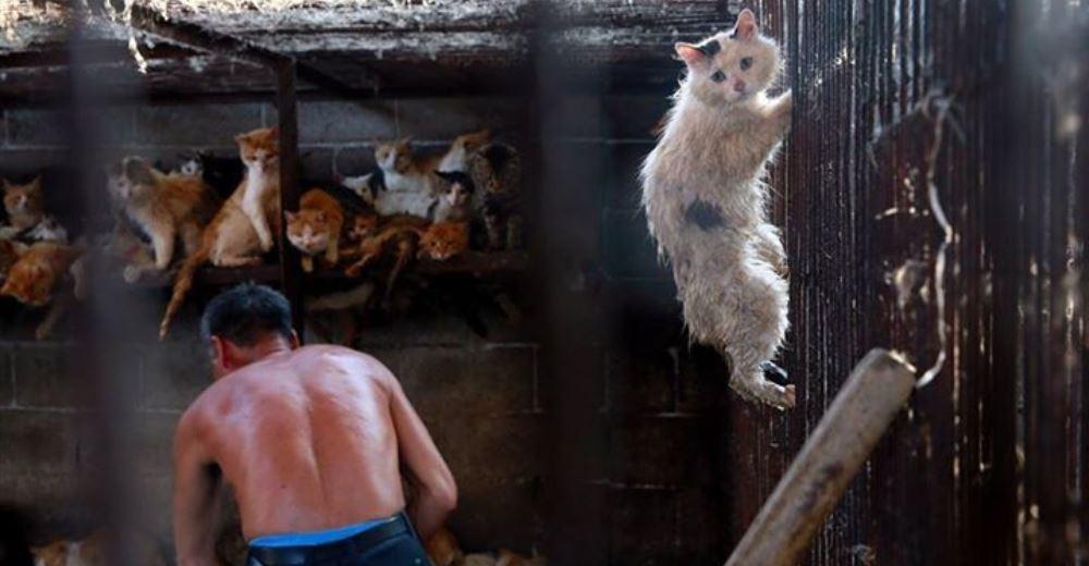 gato-festival-carne1 - copia