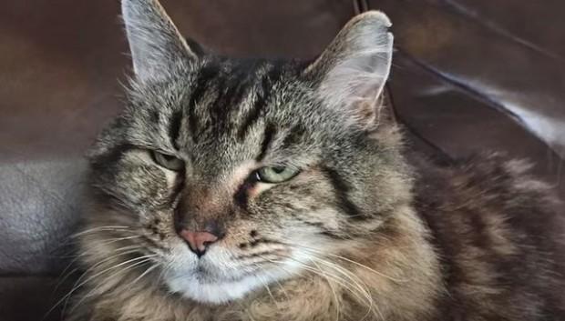 gato-mas-viejo-del-mundo