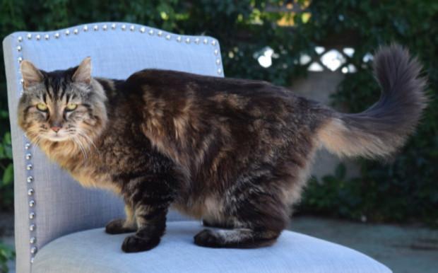 gato-mas-viejo-del-mundo10
