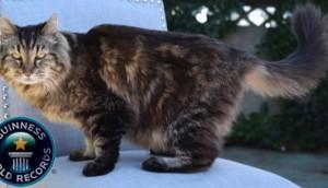 gato-mas-viejo-del-mundo10 - copia