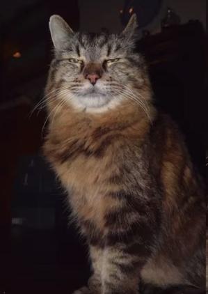 gato-mas-viejo-del-mundo5