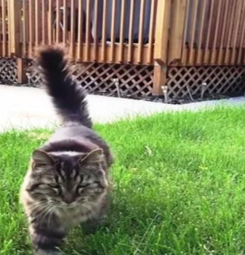 gato-mas-viejo-del-mundo8