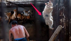 gato-rescatado-festival-carne