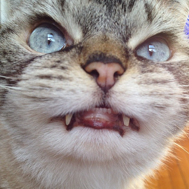 gato-vampiro10